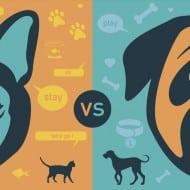 caini vs pisici