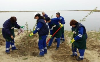 Angajatii Rompetrol au plantat 2200 de copaci la Corbu