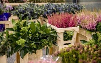 Depozit engross și, în premieră, flori din Japonia