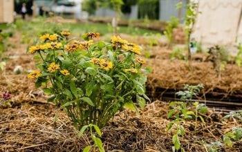 Kaufland își transformă acoperișurile în grădini urbane